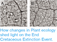 http://sciencythoughts.blogspot.co.uk/2014/09/how-changes-in-plant-ecology-shed-light.html