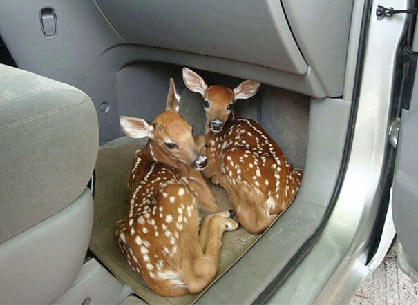 40 Heartwarming Pictures Of Animals - Left The Car Door Open Because My Hands Were Full Of Groceries. Came Back To Aww How Cute