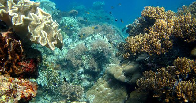 15 Tempat Wisata Terkenal yang ada di Maluku Utara -Taman Laut Pulau Widi