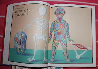 детям об анатомии