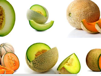 Cara Budidaya Tanaman Buah Melon