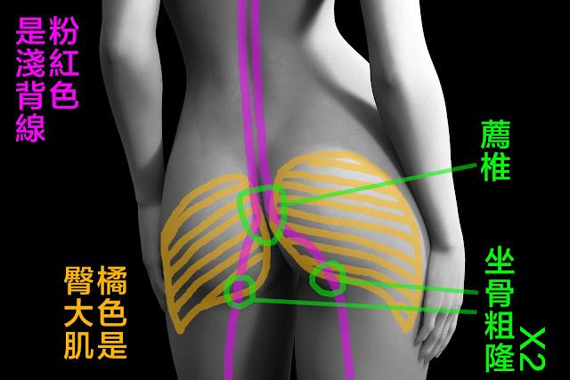 好痛痛 淺背線 屁股 坐骨粗隆 薦椎 薦粗隆韌帶 脊椎 背部 解剖列車