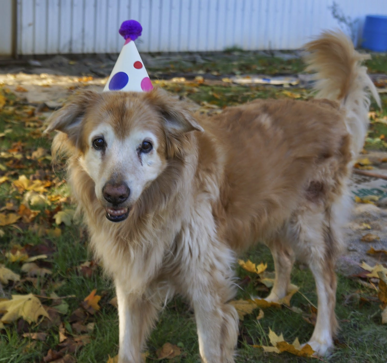 This Is A Picture Of Hannah On Her 15th Birthday She Knew The Hat Made Me Happy So Course Was To Wear It For