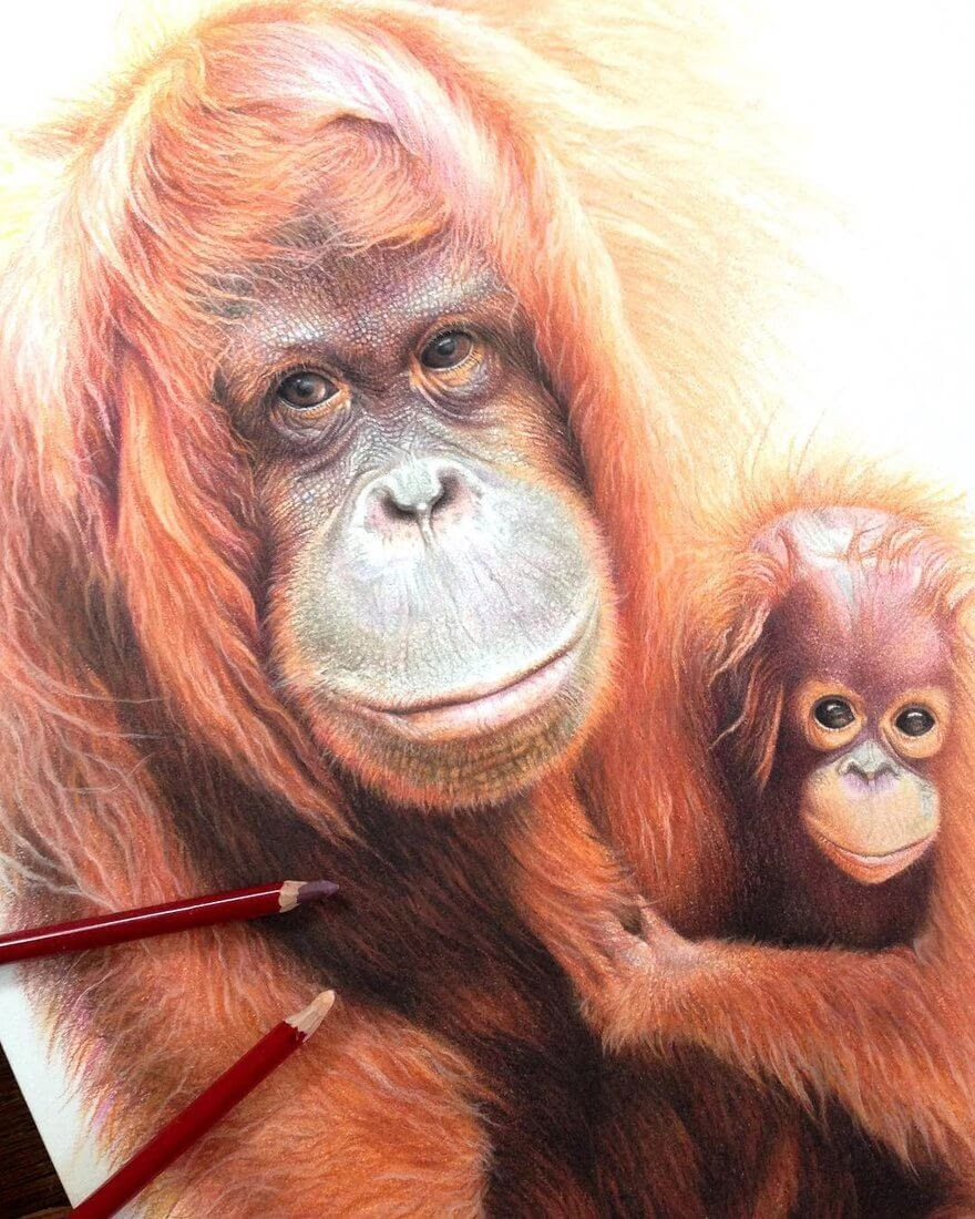 05-Orangutan-and-baby-mART-Realistic-Wildlife-Animal-Drawings-www-designstack-co