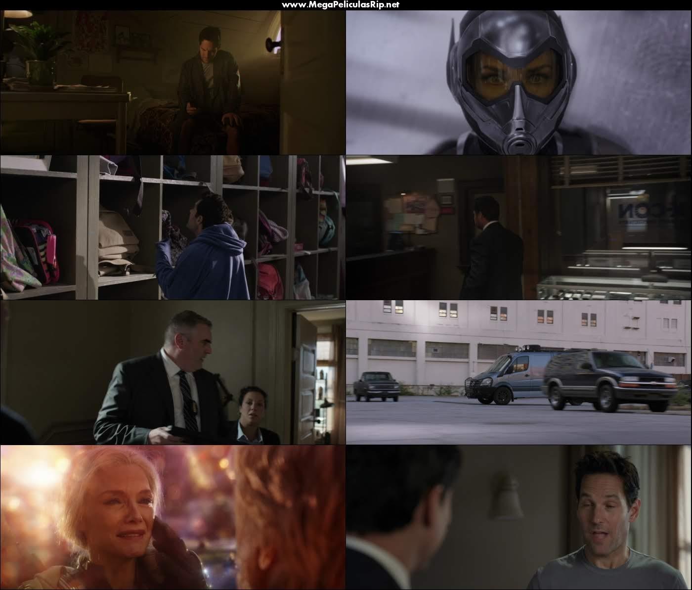 Ant Man y la Avispa 1080p Latino
