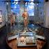 Geprint 3D-hartmodel uit LUMC verhuist naar Museum Boerhaave