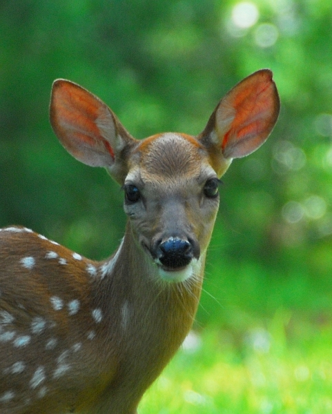 Funny Animals Funny Pictures Deer Face Funny View
