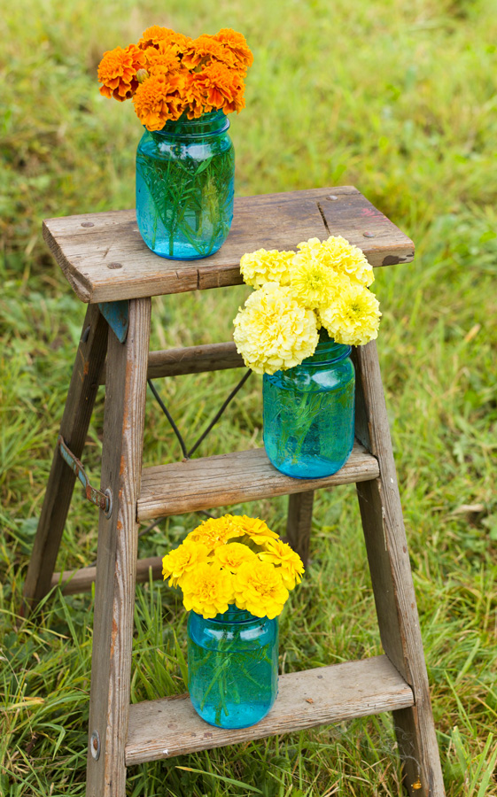 5 Gorgeous Ways To Show Off Your Marigolds Top 5