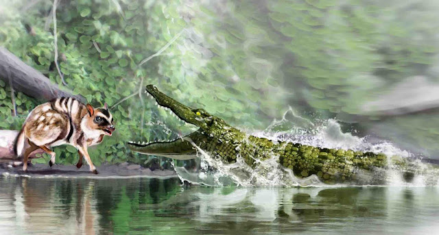 The last 'caimans' living in Spain