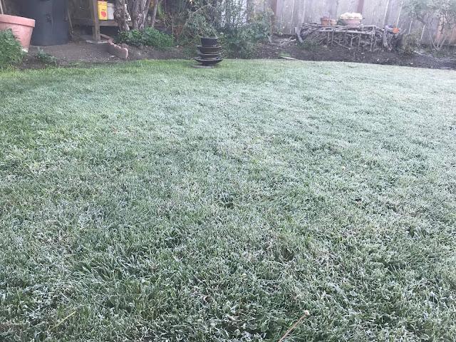 truskot, winter garden, frosty morning.