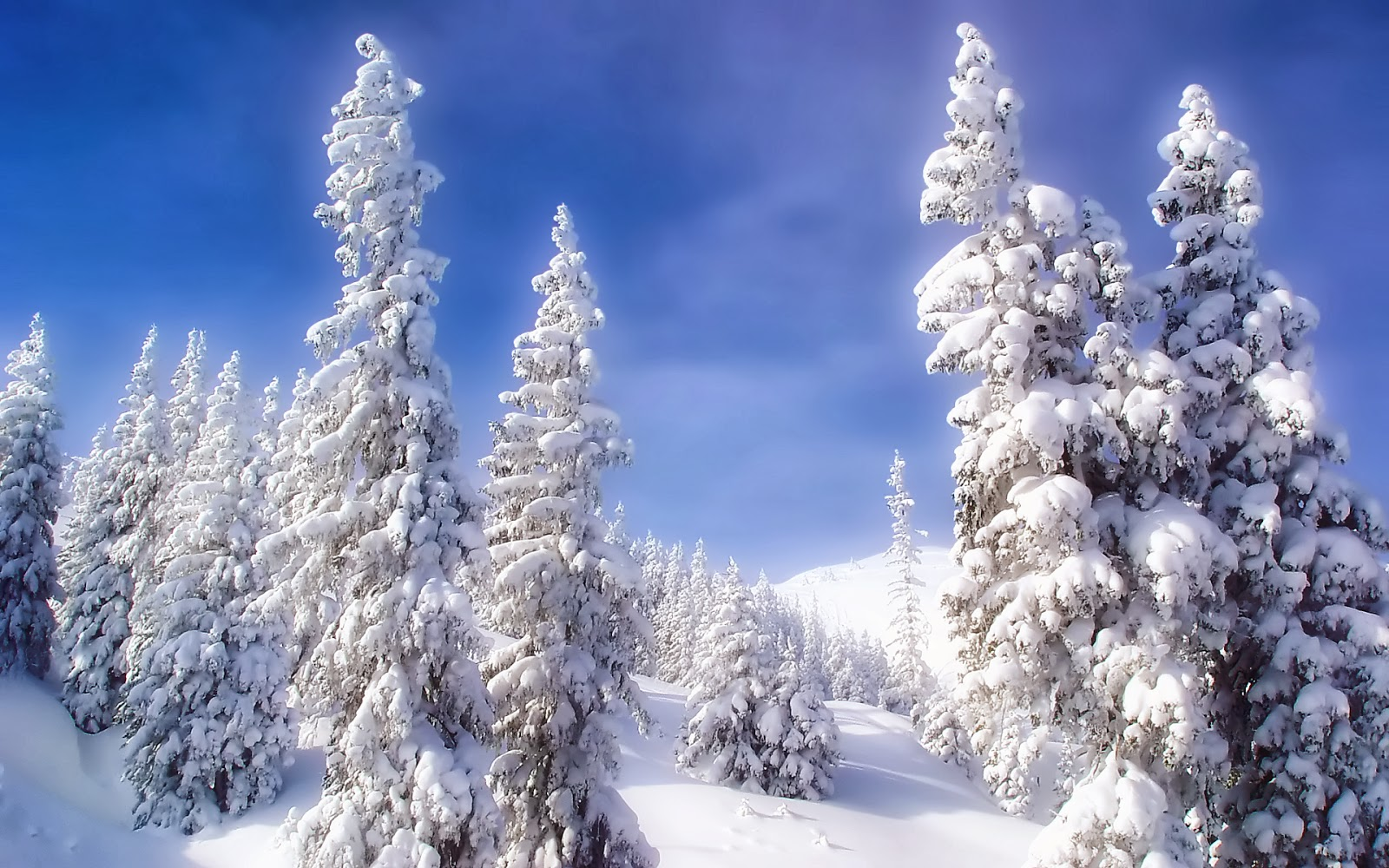 Winter HD Background Wallpapers