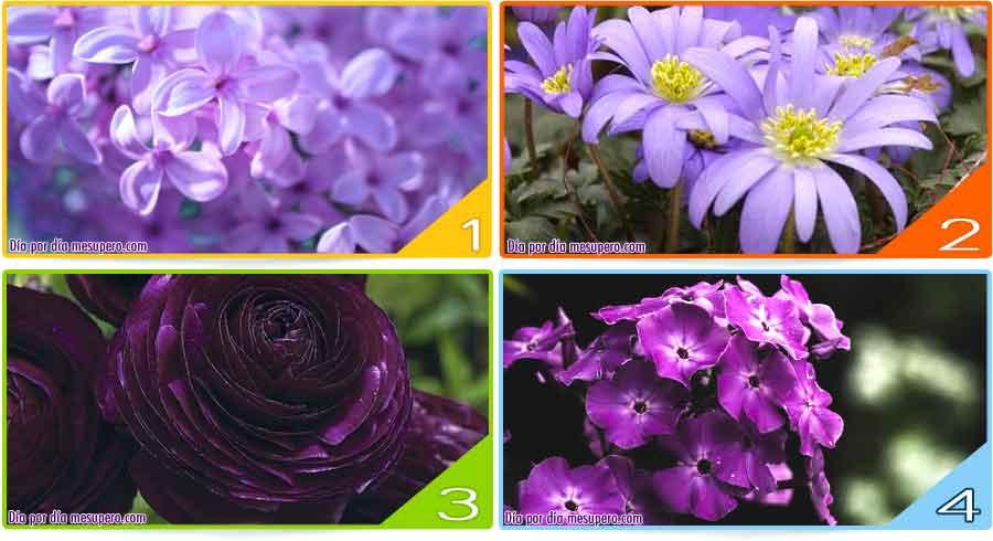 Test: El color violeta en la naturaleza