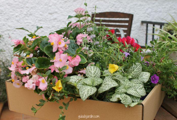 Selección de plantas de temporada