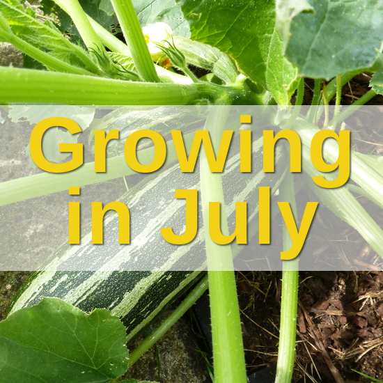 growing in july with craftymarie