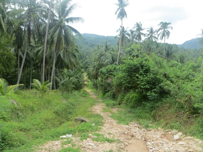 Тропинка в джунгли