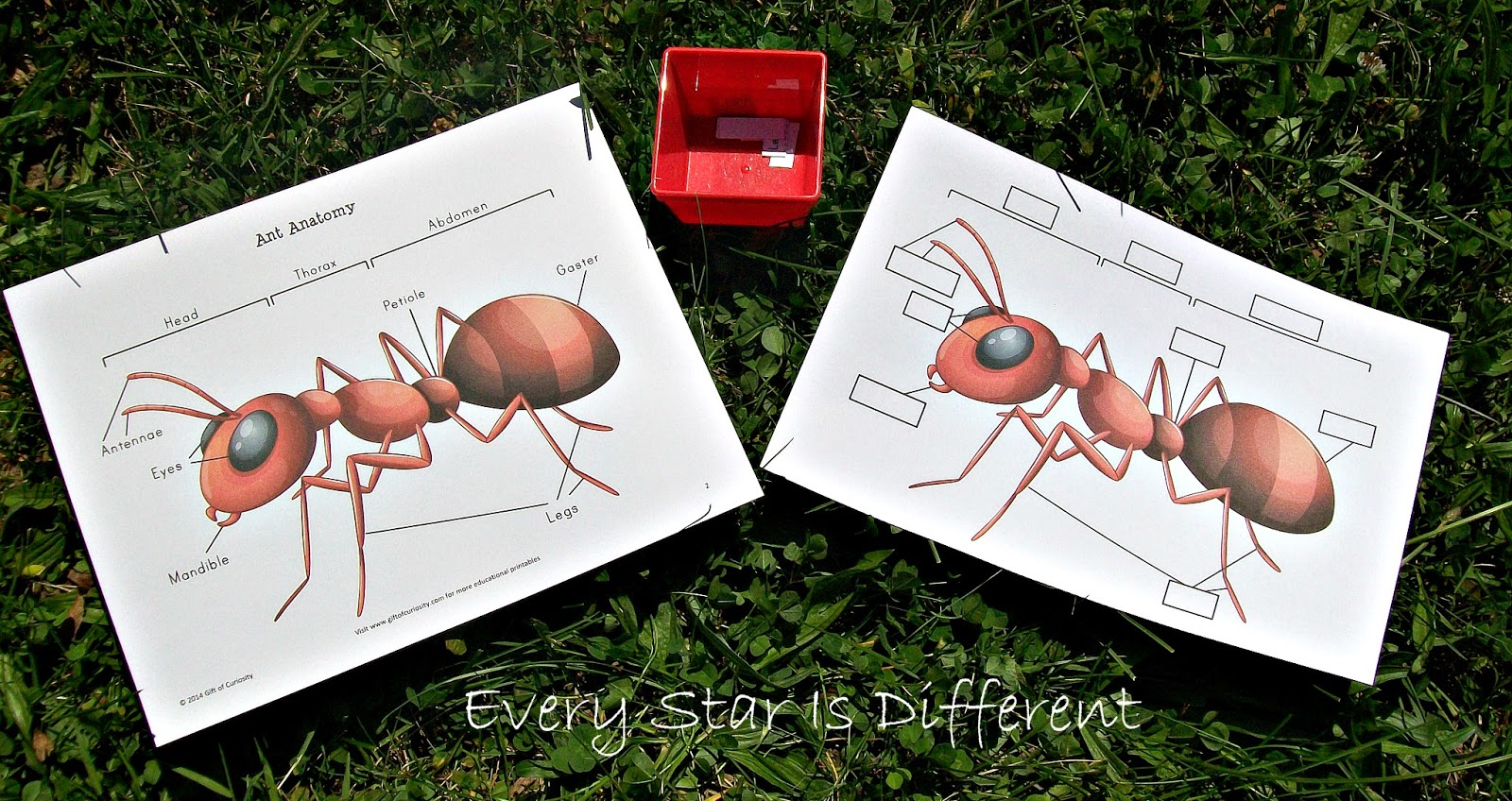 Ant anatomy activity for kids (free printable)