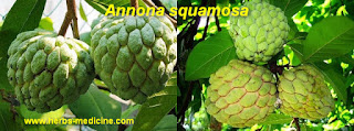 Annona squamosa benefits health