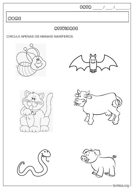 Atividade Animais Mamíferos Ciências