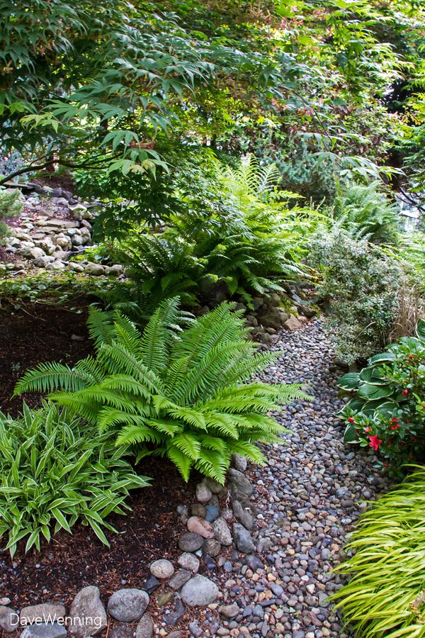 Back Yard Entry Garden
