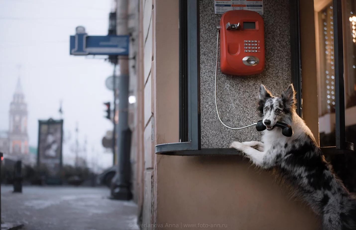 История встречи на вокзале и прогулки по Санкт-Петербургу