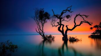 Sea, Nature, Trees, Sunset, Scenery, 4K, #6.956