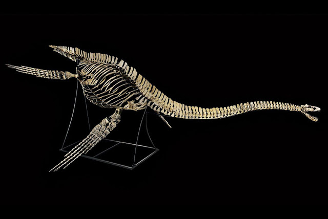 Paris auction of Moroccan 'Nessie' makes waves