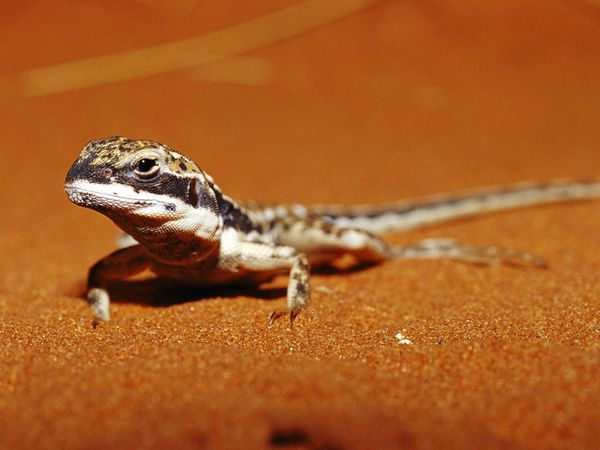 deserts animals and plants - photo #11