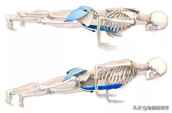 練瑜伽,學會轉動骨盆很重要!(避免損傷腰椎)