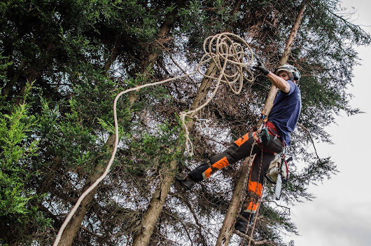 Tree Services in Nottingham
