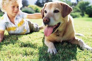 Los perros vienen en todas las formas y tamaños. A partir de ahora, hay 340 razas reconocidas en todo el mundo