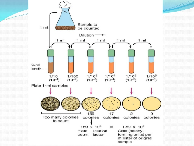 isolation and observation of bacteria Isolation, identification and screening of endophytic bacteria antagonistic to biofilm formers hira muzzamal, rabbia sarwar, imran sajid and shahida hasnain.