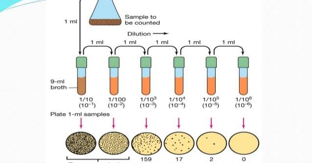 Pharmaceutical Microbiology Culture Suspension Preparation