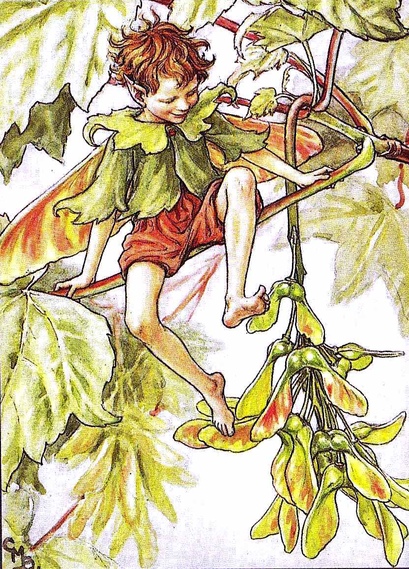 Cicely Mary Barker, tree elf boy
