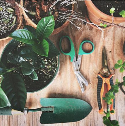 Φροντίδα κήπου-φυτών μετά το τέλος του χειμώνα