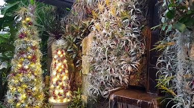 Árboles de Navidad con bromelias en el Cascade Garden de Longwood Gardens