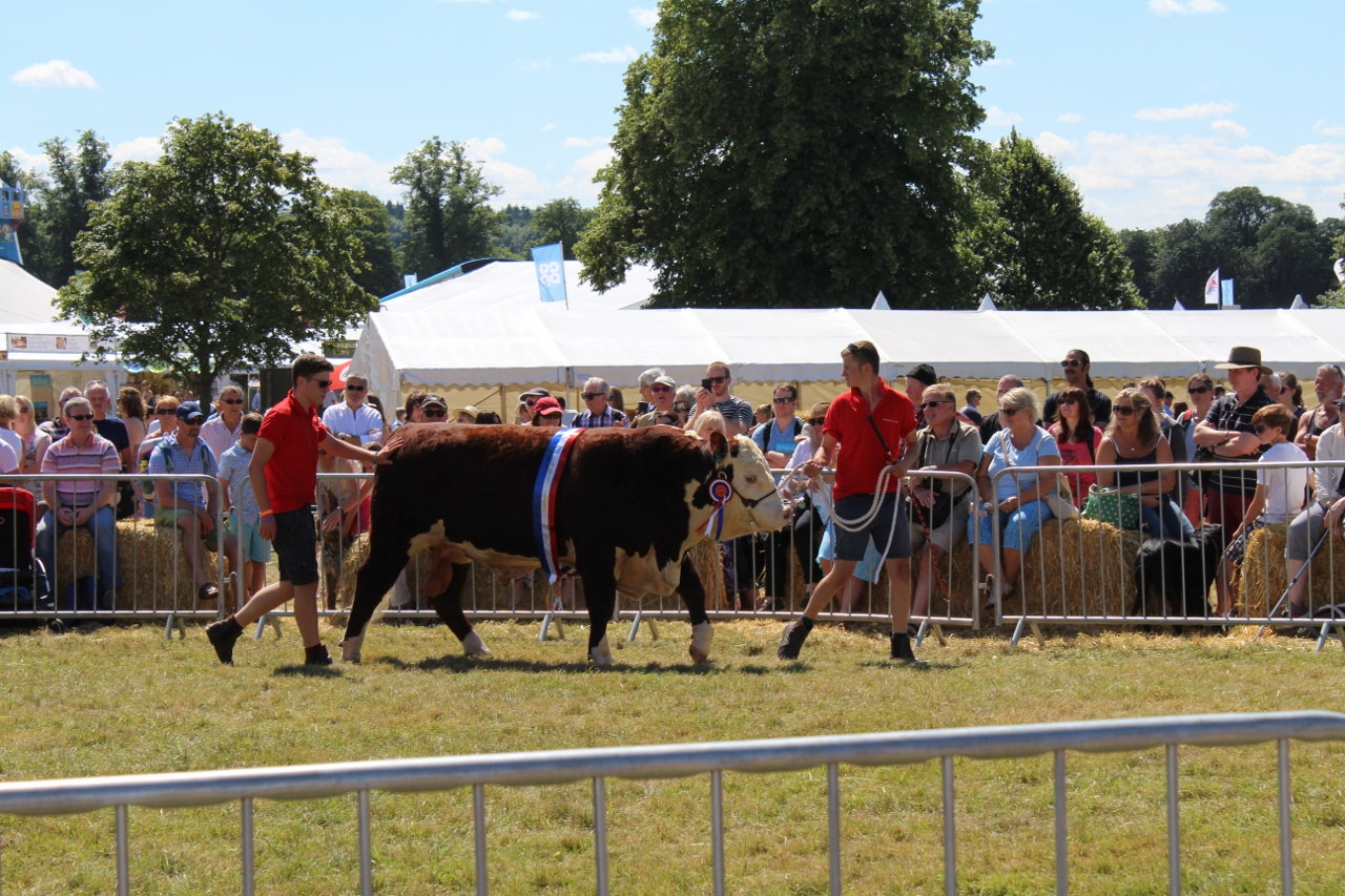 Bull Display at Adam's Farm Countryfile Live