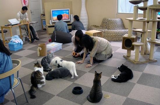 cafe kucing di jepang