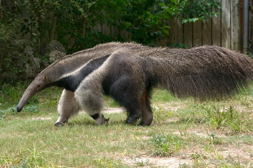 The Fall of Reynolds: Anteaters and Evolution
