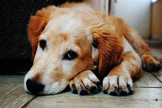 Common behaviour problems in Dogs