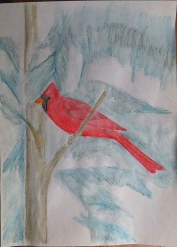 watercolor of a cardinal in progress