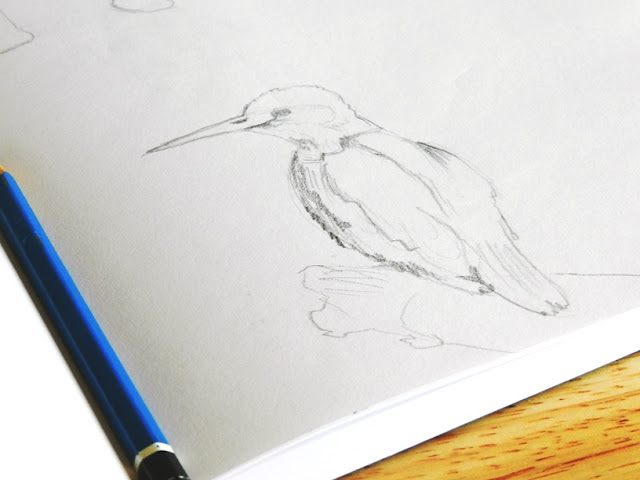 bird pencil sketch