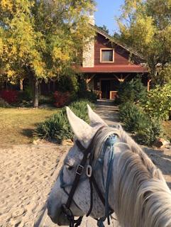 riitta reissaa, riitta kosonen, El Bronco, Horsexplore, Unkari