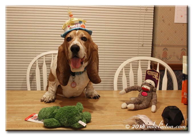 Basset Hound birthday party