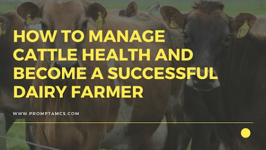 How to Manage Cattle Health and Become a Successful Dairy Farmer