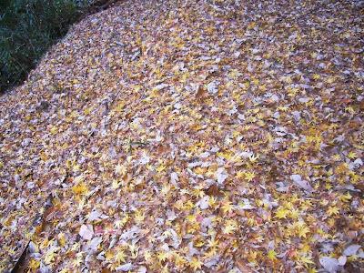 ほしだ園地・星のブランコ ウォーキング カエデの落ち葉