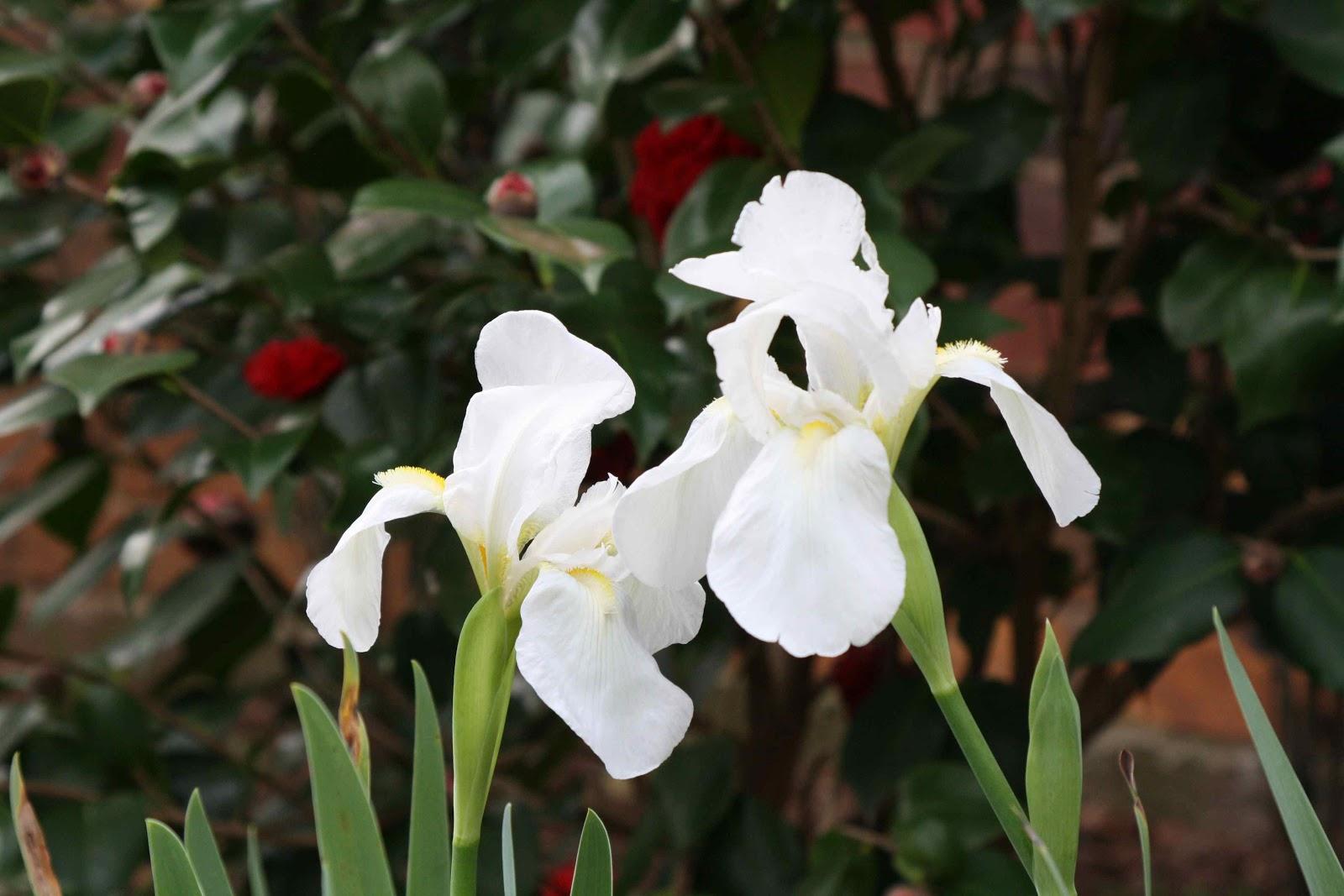 10 Endemic Flowers Of Saudi Arabia   Destination KSA