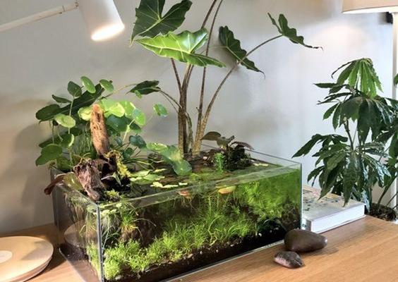 11 Indoor Aquascape Water Garden Ideas for a Better Living Room / Bedroom