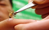 Δηλητήριο μέλισσας: Ποιές είναι οι επιπτώσεις στον ανθρώπινο οργανισμό; Όλη η αλήθεια!