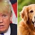 Ο ΤΡΑΜΠ ΚΑΙ ΟΙ ΣΚΥΛΟΙ! Ποια είναι η σχέση του Αμερικανού Πρόεδρου με τους σκύλους...