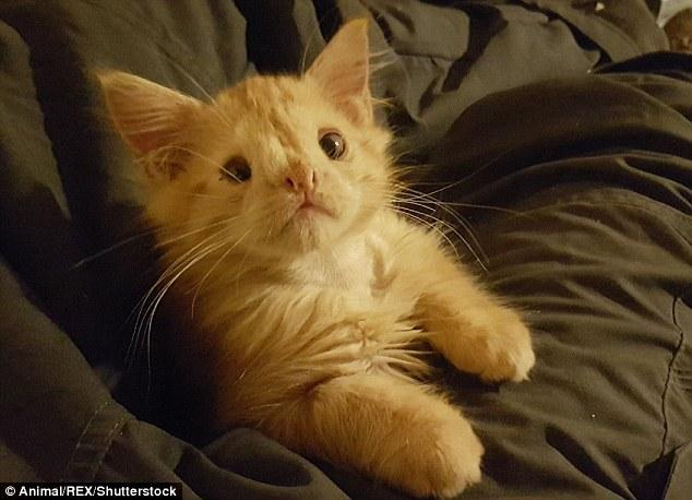Chú mèo xấu như ma cấu nên chẳng ai muốn nuôi